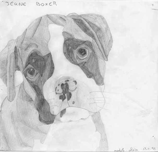 Mes dessins et peintures - Dessin de boxer ...